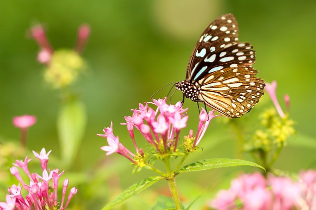 About Psychotherapy. content-butterflies